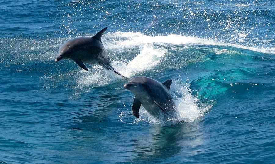 leaping-dolphins